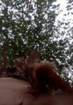 betula-nigra-bntf-dura-heat-dbk-skyview