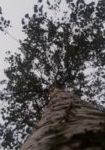betula-pubescens-dbk-skyview