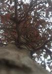 carpinus-betulus-dbk-skyview