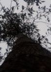 magnolia-kobus-dbk-skyview