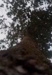 ulmus-rebona-dbk-skyview